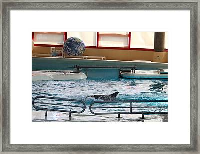Dolphin Show - National Aquarium In Baltimore Md - 1212114 Framed Print by DC Photographer