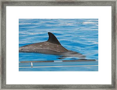 Dolphin Show - National Aquarium In Baltimore Md - 1212117 Framed Print by DC Photographer