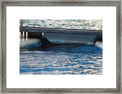 Dolphin Show - National Aquarium In Baltimore Md - 1212119 Framed Print by DC Photographer