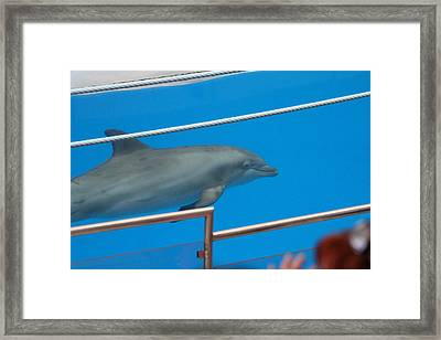 Dolphin Show - National Aquarium In Baltimore Md - 1212121 Framed Print by DC Photographer
