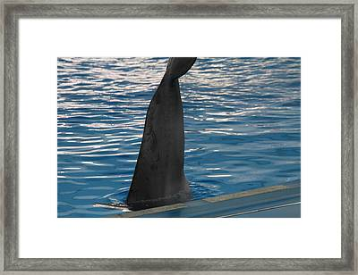 Dolphin Show - National Aquarium In Baltimore Md - 1212126 Framed Print by DC Photographer