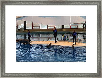Dolphin Show - National Aquarium In Baltimore Md - 1212129 Framed Print by DC Photographer
