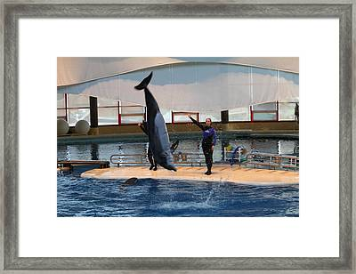Dolphin Show - National Aquarium In Baltimore Md - 1212137 Framed Print