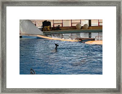 Dolphin Show - National Aquarium In Baltimore Md - 1212142 Framed Print by DC Photographer