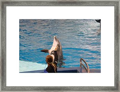 Dolphin Show - National Aquarium In Baltimore Md - 1212148 Framed Print