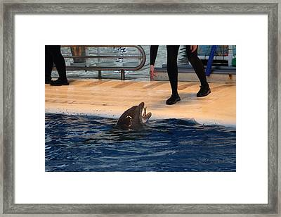 Dolphin Show - National Aquarium In Baltimore Md - 1212151 Framed Print by DC Photographer