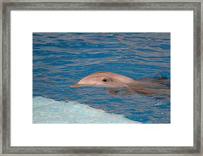 Dolphin Show - National Aquarium In Baltimore Md - 1212153 Framed Print by DC Photographer
