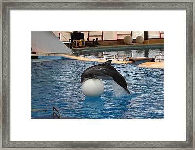 Dolphin Show - National Aquarium In Baltimore Md - 1212160 Framed Print