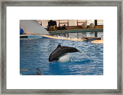 Dolphin Show - National Aquarium In Baltimore Md - 1212162 Framed Print by DC Photographer