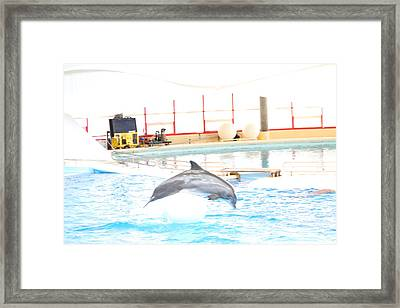 Dolphin Show - National Aquarium In Baltimore Md - 1212165 Framed Print by DC Photographer