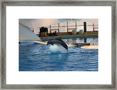 Dolphin Show - National Aquarium In Baltimore Md - 1212170 Framed Print by DC Photographer