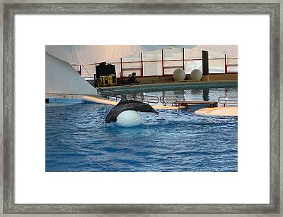 Dolphin Show - National Aquarium In Baltimore Md - 1212172 Framed Print by DC Photographer