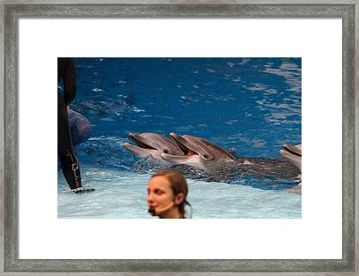 Dolphin Show - National Aquarium In Baltimore Md - 1212176 Framed Print