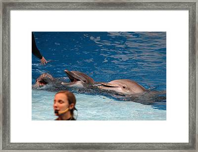 Dolphin Show - National Aquarium In Baltimore Md - 1212177 Framed Print by DC Photographer