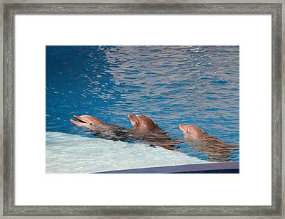 Dolphin Show - National Aquarium In Baltimore Md - 1212183 Framed Print by DC Photographer