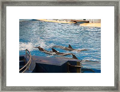 Dolphin Show - National Aquarium In Baltimore Md - 1212187 Framed Print by DC Photographer