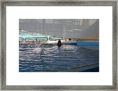 Dolphin Show - National Aquarium In Baltimore Md - 121219 Framed Print by DC Photographer