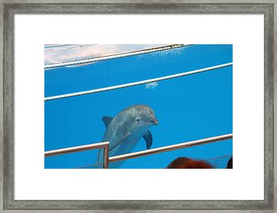 Dolphin Show - National Aquarium In Baltimore Md - 1212191 Framed Print