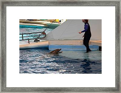 Dolphin Show - National Aquarium In Baltimore Md - 1212195 Framed Print by DC Photographer