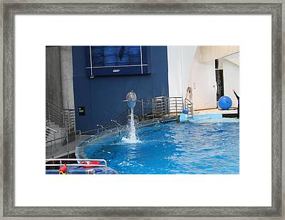 Dolphin Show - National Aquarium In Baltimore Md - 1212199 Framed Print by DC Photographer