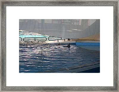 Dolphin Show - National Aquarium In Baltimore Md - 121220 Framed Print