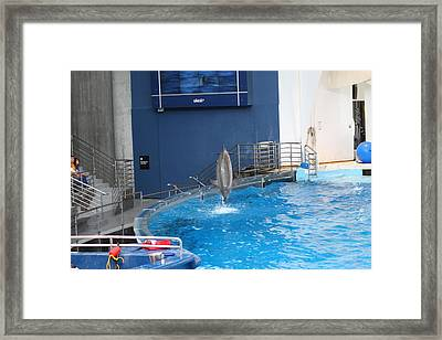 Dolphin Show - National Aquarium In Baltimore Md - 1212202 Framed Print by DC Photographer