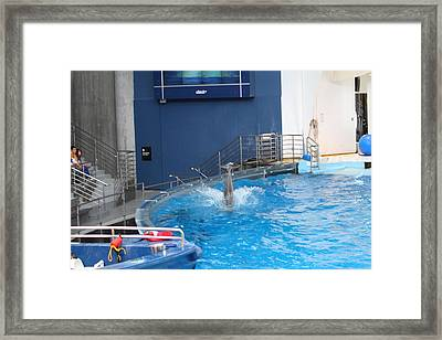 Dolphin Show - National Aquarium In Baltimore Md - 1212204 Framed Print by DC Photographer