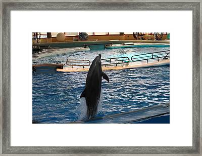 Dolphin Show - National Aquarium In Baltimore Md - 1212209 Framed Print by DC Photographer