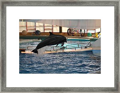 Dolphin Show - National Aquarium In Baltimore Md - 1212213 Framed Print by DC Photographer