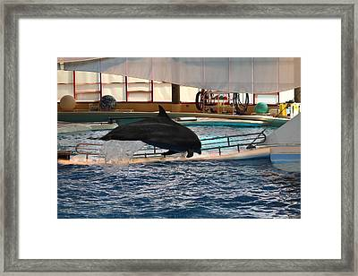 Dolphin Show - National Aquarium In Baltimore Md - 1212214 Framed Print