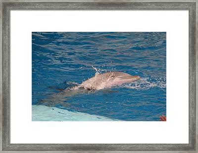 Dolphin Show - National Aquarium In Baltimore Md - 1212218 Framed Print