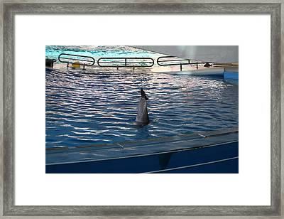 Dolphin Show - National Aquarium In Baltimore Md - 121222 Framed Print by DC Photographer