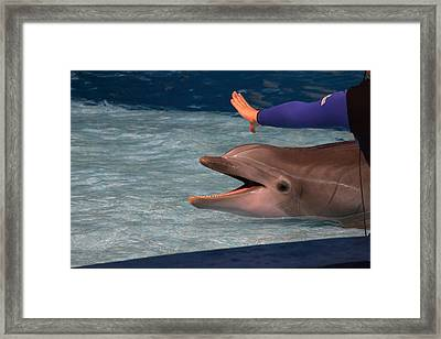 Dolphin Show - National Aquarium In Baltimore Md - 1212220 Framed Print by DC Photographer