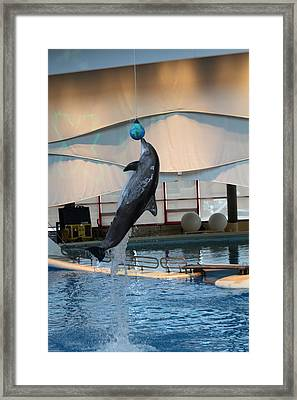 Dolphin Show - National Aquarium In Baltimore Md - 1212234 Framed Print by DC Photographer