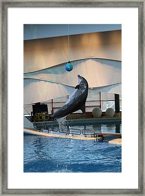 Dolphin Show - National Aquarium In Baltimore Md - 1212236 Framed Print by DC Photographer
