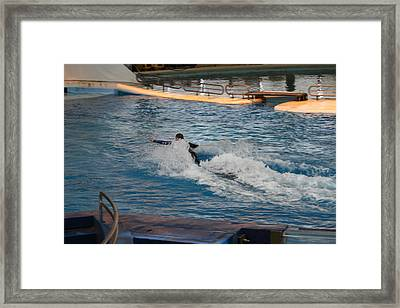 Dolphin Show - National Aquarium In Baltimore Md - 1212243 Framed Print