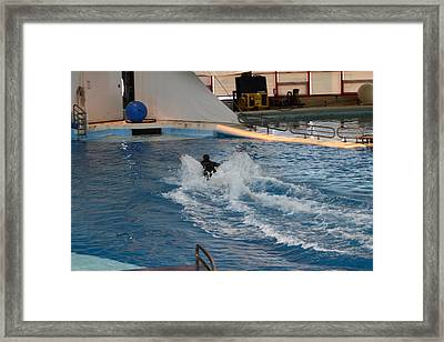 Dolphin Show - National Aquarium In Baltimore Md - 1212245 Framed Print by DC Photographer