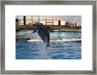 Dolphin Show - National Aquarium In Baltimore Md - 1212247 Framed Print