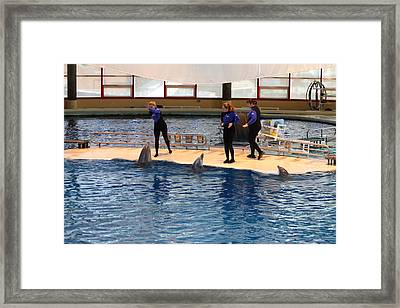 Dolphin Show - National Aquarium In Baltimore Md - 121225 Framed Print by DC Photographer