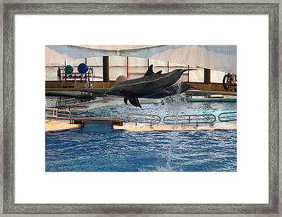 Dolphin Show - National Aquarium In Baltimore Md - 1212250 Framed Print by DC Photographer