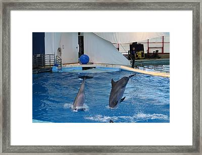 Dolphin Show - National Aquarium In Baltimore Md - 1212261 Framed Print