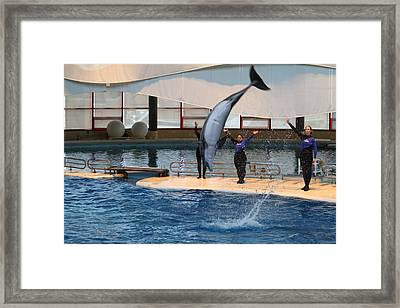 Dolphin Show - National Aquarium In Baltimore Md - 1212273 Framed Print