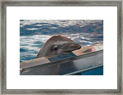 Dolphin Show - National Aquarium In Baltimore Md - 1212280 Framed Print by DC Photographer