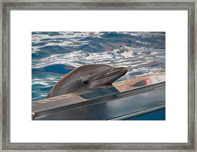 Dolphin Show - National Aquarium In Baltimore Md - 1212282 Framed Print by DC Photographer