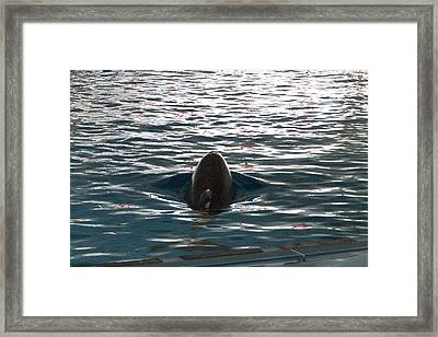 Dolphin Show - National Aquarium In Baltimore Md - 12123 Framed Print