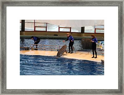 Dolphin Show - National Aquarium In Baltimore Md - 121231 Framed Print by DC Photographer