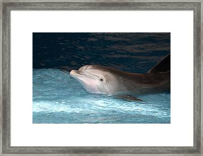 Dolphin Show - National Aquarium In Baltimore Md - 121232 Framed Print by DC Photographer