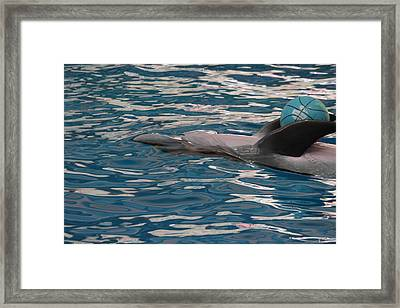 Dolphin Show - National Aquarium In Baltimore Md - 121235 Framed Print