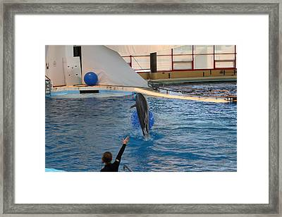 Dolphin Show - National Aquarium In Baltimore Md - 121239 Framed Print by DC Photographer