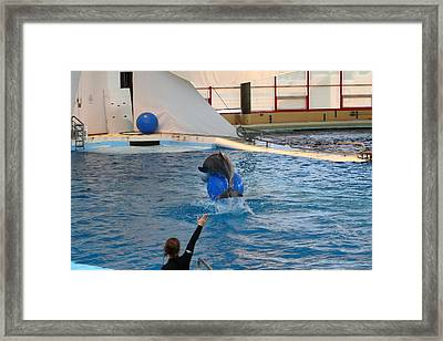 Dolphin Show - National Aquarium In Baltimore Md - 121240 Framed Print